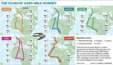The cuckoos' 6,000-mile journey | 100 Acre Wood | Scoop.it