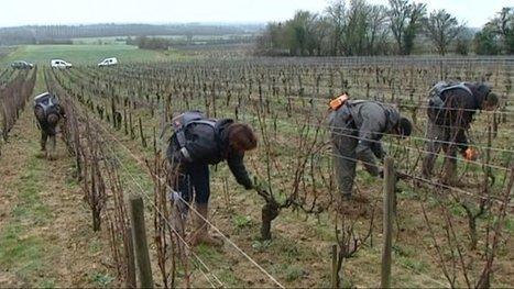 Libéralisation des droits de plantation: les craintes du vignoble de Menetou-Salon - France 3 Centre-Val de Loire | Le Fil @gricole | Scoop.it