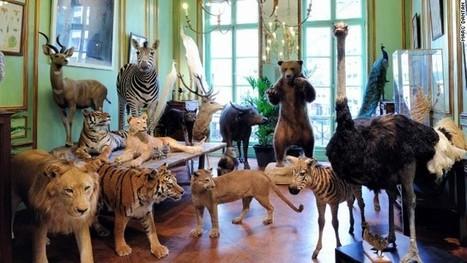 9 quirky and brilliant Paris boutiques - CNN International | C'est en France ! | Scoop.it