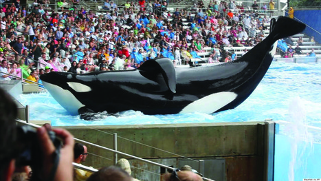 The Blackfish Effect: How Animal Rights Advocates Are Winning | All about water, the oceans, environmental issues | Scoop.it