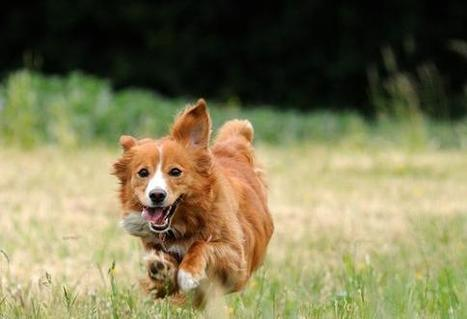 10 Healthiest Dog Breeds | petMD | Dog Lovers | Scoop.it