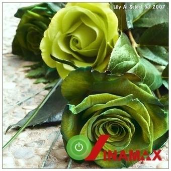 Hộp hoa tươi tặng thầy cô giáo ngày 20-11   Qùa tặng thầy cô 20-11   Scoop.it