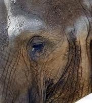 Denuncian maltrato animal en Zoo de Barcelona | Ecologismo | Pablo Galgo | Scoop.it