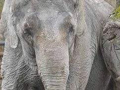 AT LAST! Ban on ALL wild animals in circuses is passed   Nature   News   Daily Express   Rapid Environmental Services   Scoop.it