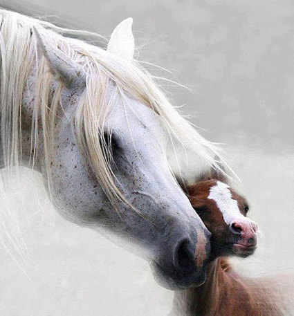 Magnificent Examples of Horse Photography [26 Pictures] | Western lifestyle | Scoop.it