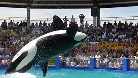 NOAA: Lolita Now Covered Under Endangered Species Act | Endangered Wildlife | Scoop.it