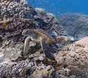 Google 'Street View' Will Document Changes to World's Coral Reefs   A New Leaf   Scoop.it