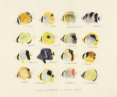 Japanese Artist Creates Delicate Watercolor Paintings of Fish Every Week | Le It e Amo ✪ | Scoop.it