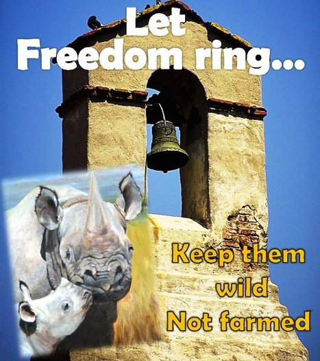 Let Freedom Ring... for the Rhino! Say NO to Poaching and Farming | What's Happening to Africa's Rhino? | Scoop.it
