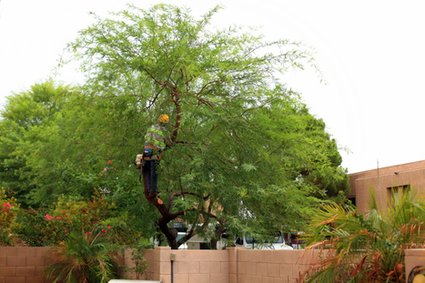 Our Tree Contractor Knows the Secrets of Mulching » CJ S Tree Service of Omaha | Tree Service | Scoop.it