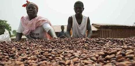 Pauvreté des producteurs de cacao : pas de futur pour le chocolat - Agro Media | Actualité de l'Industrie Agroalimentaire | agro-media.fr | Scoop.it