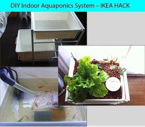 DIY Indoor Aquaponics System – IKEA HACK! - LivingGreenAndFrugally.com | Garden tips and diy | Scoop.it