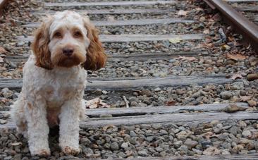 Success! Animal Cruelty is Finally a  Felony in North Dakota | Animals R Us | Scoop.it