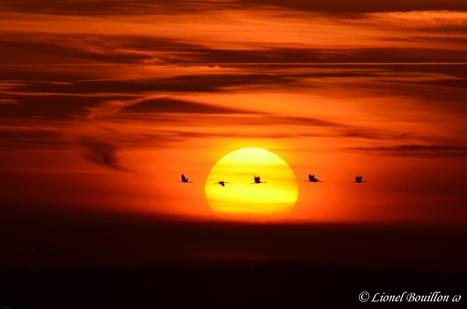 Lionel BOUILLON – Photographe amateur | photographie animalière et nature | Scoop.it