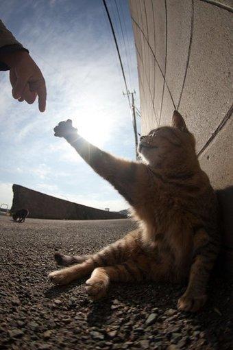 Top 40 des photos du paradis des chats, une ile au Japon | cats cats cats | Scoop.it