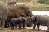 New Duties for Holder and Kerry: Combat Wildlife Trafficking in Africa   Wildlife Trafficking: Who Does it? Allows it?   Scoop.it