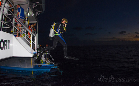 10 tips for night diving   All about water, the oceans, environmental issues   Scoop.it