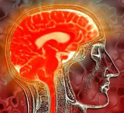 Scienza: simulata l'1% dell'attività neuronale del cervello umano - Meteo Web   Neuroscienze   Scoop.it