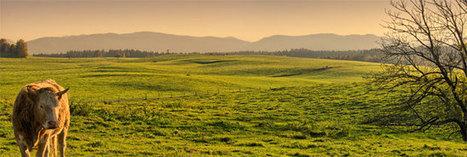 Les enjeux d'une agriculture productive pour l'Europe - Consoglobe | Développement territorial | Scoop.it