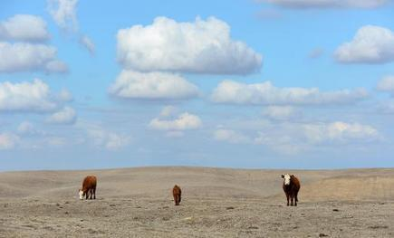 Ranchers pray for rain in drought-hit California | Sustain Our Earth | Scoop.it