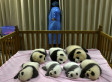 AWW: Chengdu Panda Cubs Are The Cutest Things On Earth | Xposed | Scoop.it