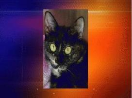 WZTV FOX 17 :: Newsroom - Top Stories - You Can Help Give a Dog or Cat a New Home Today | Tennessee Libraries | Scoop.it
