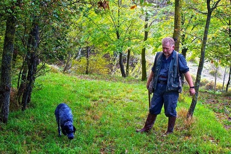 Where to go Truffle hunting in Le Marche, Italy by Prachi Jochi | Le Marche another Italy | Scoop.it