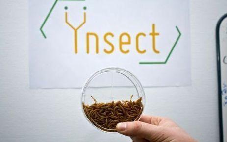 Ynsect veut nourrir la planète avec des mouches | Entomophagy: Edible Insects and the Future of Food | Scoop.it