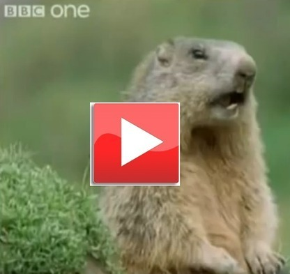 Funny Talking Animals | Marketing Done Right | Scoop.it