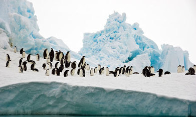 US government shutdown puts Antarctica penguin study on ice | Sciences & Technology | Scoop.it