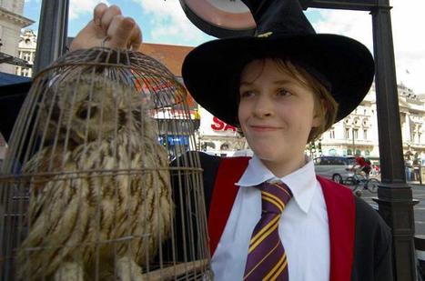 Quand la mode d'Harry Potter passe, les enfants abandonnent leurs chouettes | Ecologie et protection animale | Scoop.it