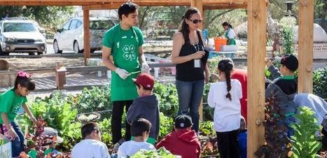Governor Names UA's 4-H as 2014 Volunteer Service Award Recipient | UANews | CALS in the News | Scoop.it