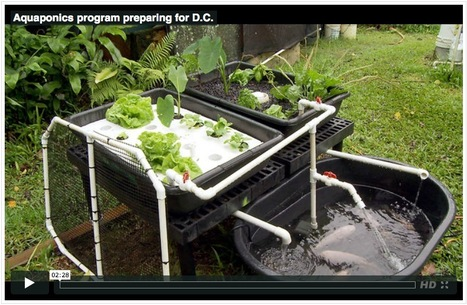 Aquaponics program preparing for DC : University of Hawaiʻi ... | Wellington Aquaponics | Scoop.it
