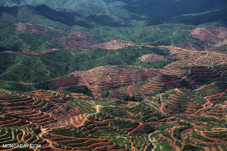 Agriculture causes 80% of tropical deforestation - The Terrible Price We Pay | Biodiversity IS Life  – #Conservation #Ecosystems #Wildlife #Rivers #Forests #Environment | Scoop.it