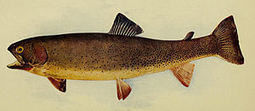 Yellowstone Is Saving Native Trout With Lessons Learned From (Gasp!) The ... - Forbes | Fish Habitat | Scoop.it