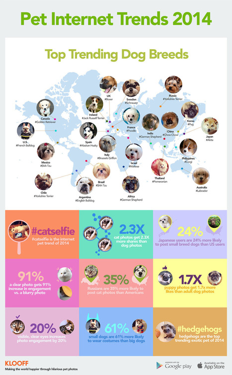Mashable — Top Trending Dog Breeds This handy visualization,... | Interesting Scoops | Scoop.it