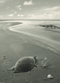 First European Sea Turtles Became Extinct Due To Changing Sea Levels   All about water, the oceans, environmental issues   Scoop.it