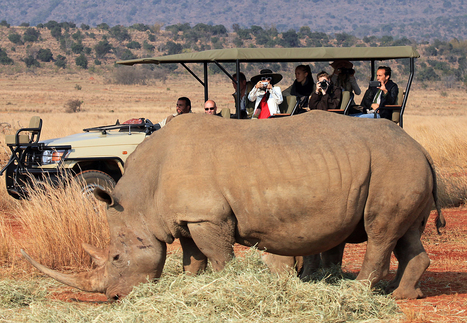 Rhino poaching hits new high in South Africa, experts warn of extinction in wild | Poaching & Wildlife Crime | Scoop.it