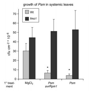 The Arabidopsis Flavin-Dependent Monooxygenase FMO1 Is an Essential Component of Biologically Induced Systemic Acquired Resistance (2006) | Local and Systemic Immunity in Plants | Scoop.it