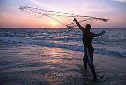 WWF destaca que el consumo de pescado y marisco de origen sostenible alivia la presión sobre lo | Planeta Tierra | Scoop.it