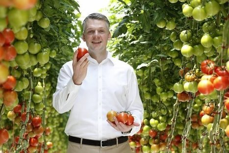 Wüstentomaten aus Australien | Agrarforschung | Scoop.it