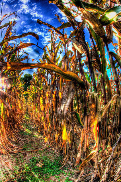 "30 Awesome Cornfield Pictures for your Inspiration - Naldz Graphics | ""Cameras, Camcorders, Pictures, HDR, Gadgets, Films, Movies, Landscapes"" 