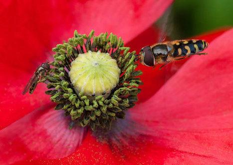 La pollinisation en crise ? | animaux | Scoop.it