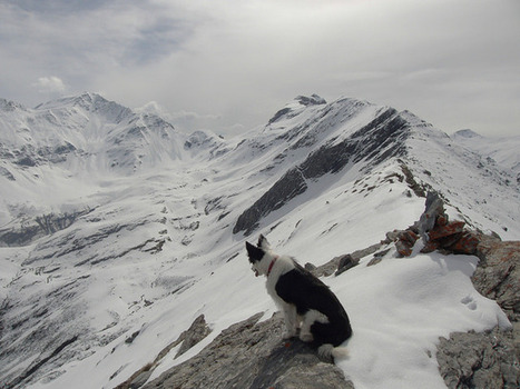 Goofy près des Aguilous le 27 mai 2014 - Simon d'Etache | Vallée d'Aure - Pyrénées | Scoop.it
