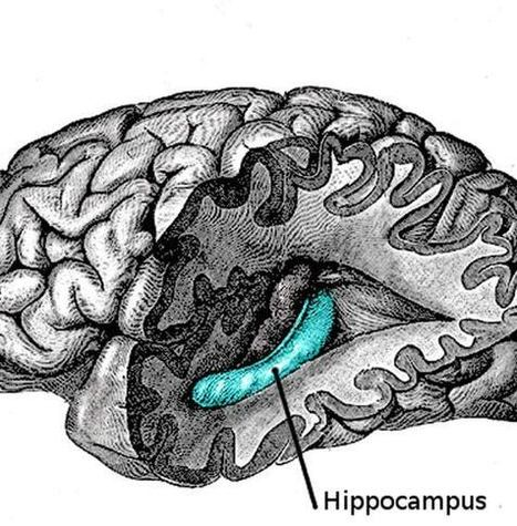 Discovering the Brain's Memory Switch | Learning & Mind & Brain | Scoop.it