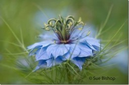 5 Tips For Fine Art Flower Photography | Photography tips and tools | Scoop.it