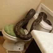 Woman Investigates Strange Noises in Her House, Finds a 12-Foot-Long Snake ... - E! Online | In Today's News of the Weird | Scoop.it