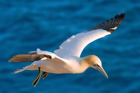 Les oiseaux migrateurs victimes du pillage des mers d'Afrique de l'ouest | Biodiversité | Scoop.it