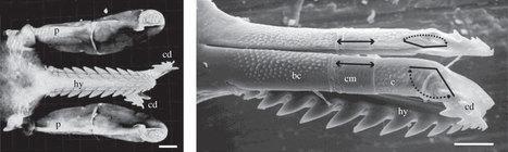 Gros plan sur la tique   EntomoScience   Scoop.it