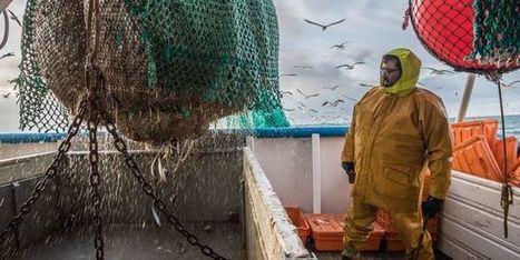 La sauvegarde de l'océan ne compte guère dans les choix des consommateurs de poisson | Mer & Enseignements | Scoop.it